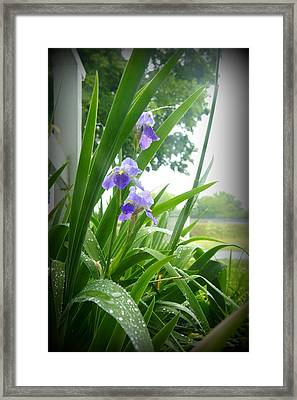 Framed Print featuring the photograph Iris With Dew by Laurie Perry
