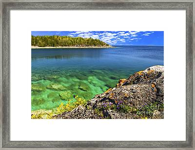 Violets At Georgian Bay Framed Print by Elena Elisseeva