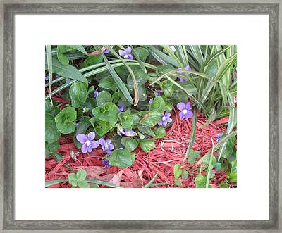 Violets Framed Print by Diane Mitchell