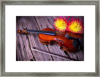 Violin With Spider Mums Framed Print by Garry Gay