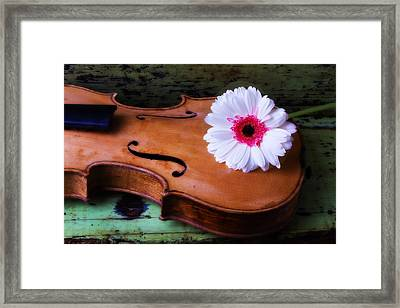 Violin With White Daisy Framed Print by Garry Gay