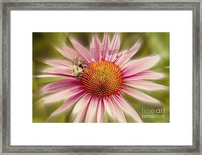Vip Very Important Pollinator Framed Print