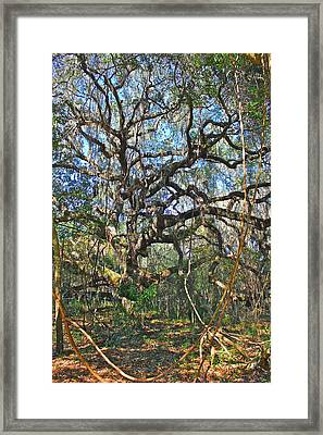 Virgin Forest Framed Print by Lorna Maza