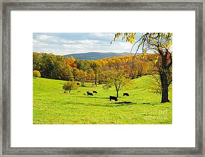 Virginia Autumn Framed Print by Olivia Hardwicke