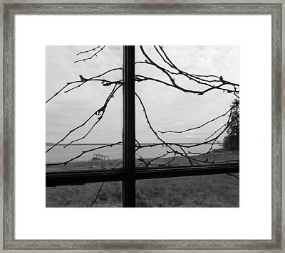 Virginia Creeper  Framed Print by Cheryl Hoyle