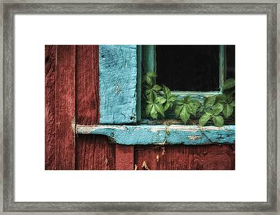 Virginia Creeper Framed Print by James Barber