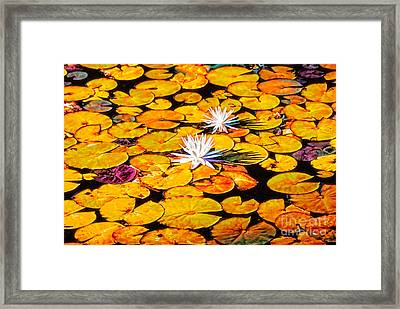 Virginia Lilies Framed Print