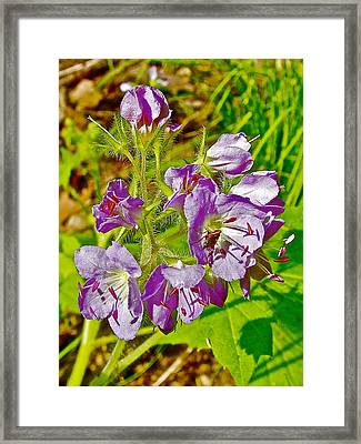 Virginia Waterleaf Near Jackson Falls Along Natchez Trace Parkway-tennessee  Framed Print by Ruth Hager