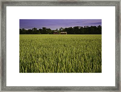 Virginia Wheat Field Framed Print