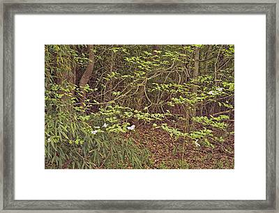 Virginia Woods Photo Framed Print by Peter J Sucy