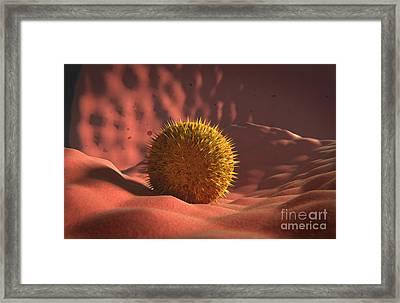 Virus Landing On Cell Membrane Framed Print by Stocktrek Images