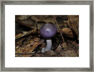 Viscid Violet Cort Framed Print by Rebecca Jayne
