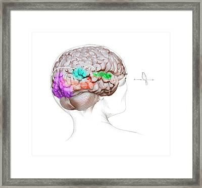 Vision And Sound Neurology Framed Print by Nicolle R. Fuller