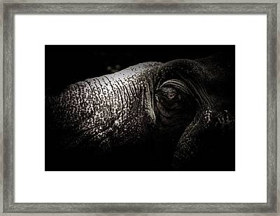 Vision Of Life Framed Print by Zestgolf
