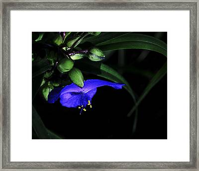 Vision Of Purple Framed Print by Camille Lopez