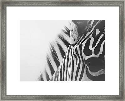 Visions Framed Print by Carrie Ann Grippo-Pike