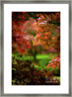 Visions Of Leaves Framed Print by Venetta Archer