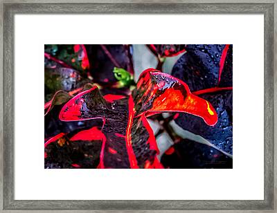 Visions Of Red Framed Print