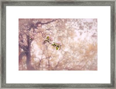 Visions Of Spring Framed Print by Dustin Abbott