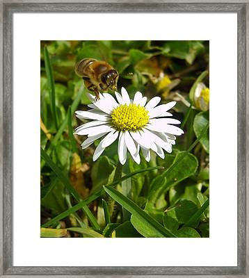 Visiting Miss Daisy Framed Print by Nina Ficur Feenan