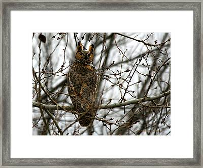 Visiting Owl Framed Print by Rebecca Adams