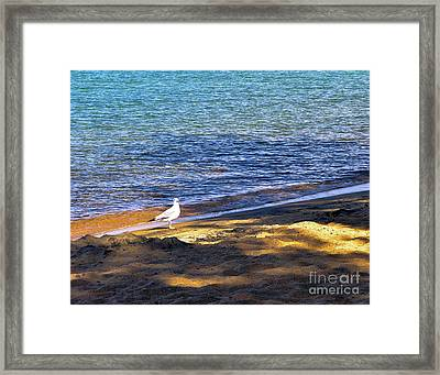 Visitor - Lake Tahoe Framed Print