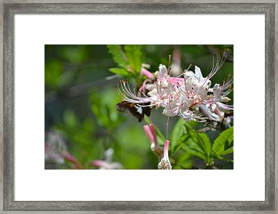 Framed Print featuring the photograph Visitor by Tara Potts