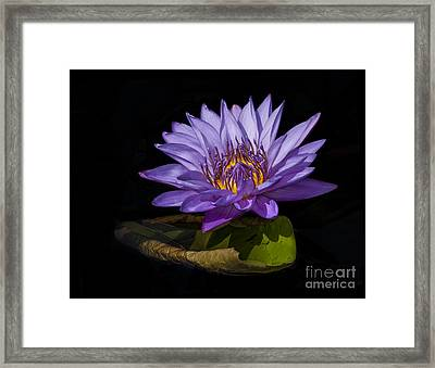 Framed Print featuring the photograph Visitor To The Water Lily by Roman Kurywczak