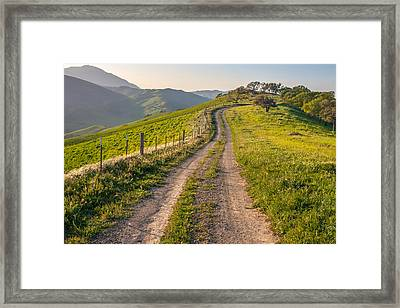 Vista Grande Trail And Mt Diablo Framed Print