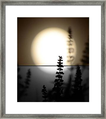 Vitex Moon Framed Print