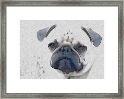 Vito Framed Print by Cindy Luelling