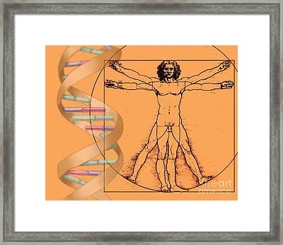 Vitruvian Man With Dna Framed Print