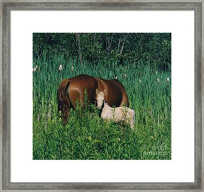 Viva Zapata Contratercero And Her Dam Calista Framed Print by Patricia Keller