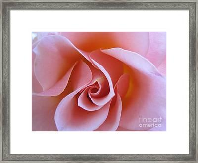 Vivacious Pink Rose Framed Print