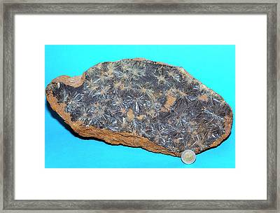 Vivianite II Framed Print