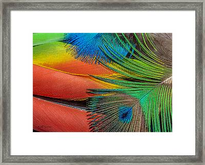 Vivid Colored Feathers Framed Print by Jeff Swanson