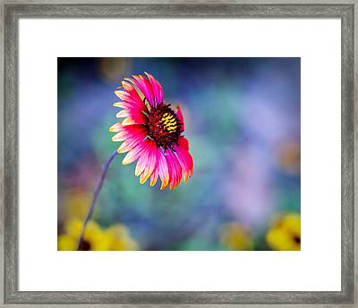 Vivid Colors Framed Print by Tammy Smith