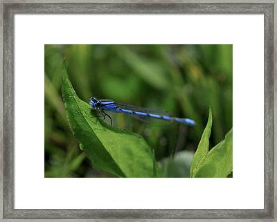 Vivid Dancer  Framed Print