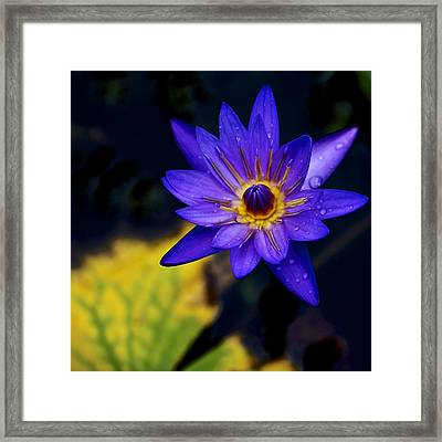 Vivid Framed Print by Jade Moon