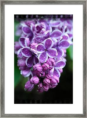 Vivid Lilac Framed Print