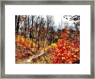 Vivid Pathway Framed Print