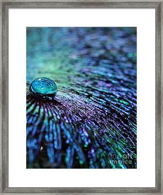 Vivid Peacock Framed Print by Krissy Katsimbras