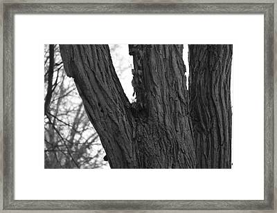 Vivid Shape Framed Print by Stacie  Goodloe