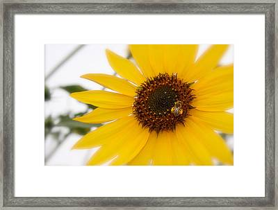 Framed Print featuring the photograph Vivid Sunflower With Bee Fine Art Nature Photography  by Jerry Cowart