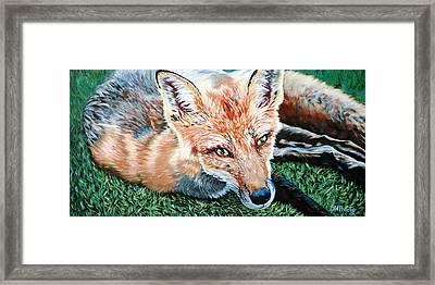 Vixen - Red Fox Framed Print