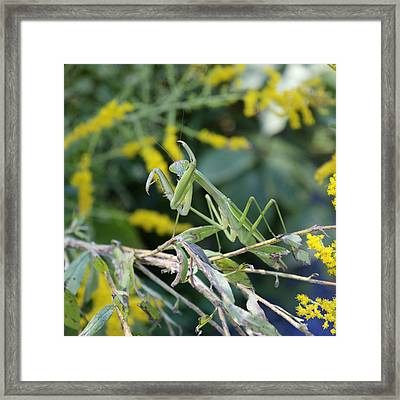 Framed Print featuring the photograph Vogue by Kathleen Holley