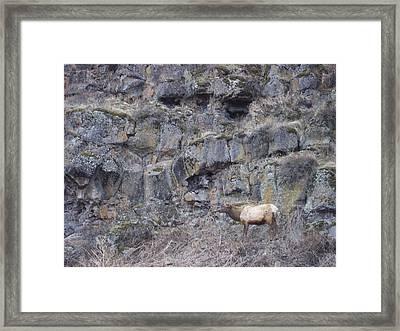 Volcanic Formation And Elk Framed Print