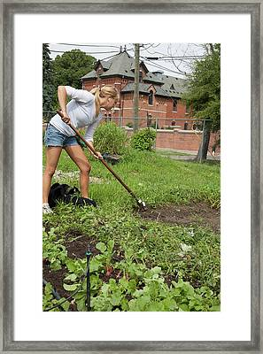 Volunteer Weeding At An Urban Farm Framed Print by Jim West