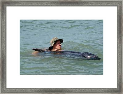 Volunteer With Stranded Pygmy Killerwhale Framed Print