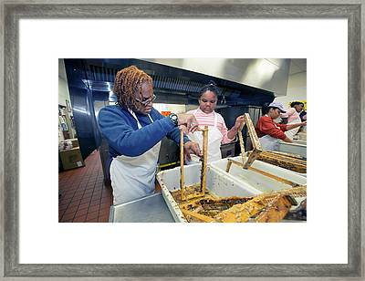 Volunteers Cleaning Honeycomb Frames Framed Print by Jim West